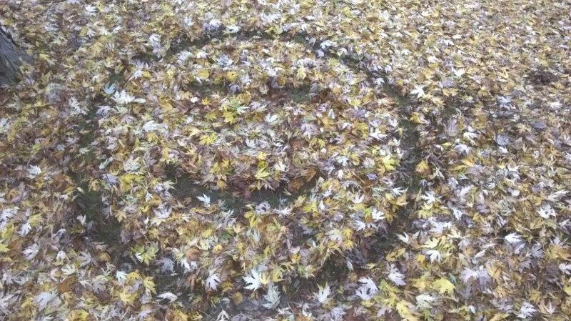 Blättersmilie / Dorothea Kruse