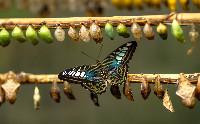 Schmetterlin-Raupen-hakon-grimstad-hteXWSF9jA4-unsplash.jpg