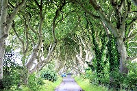 WILD 07 Nordirland.jpg