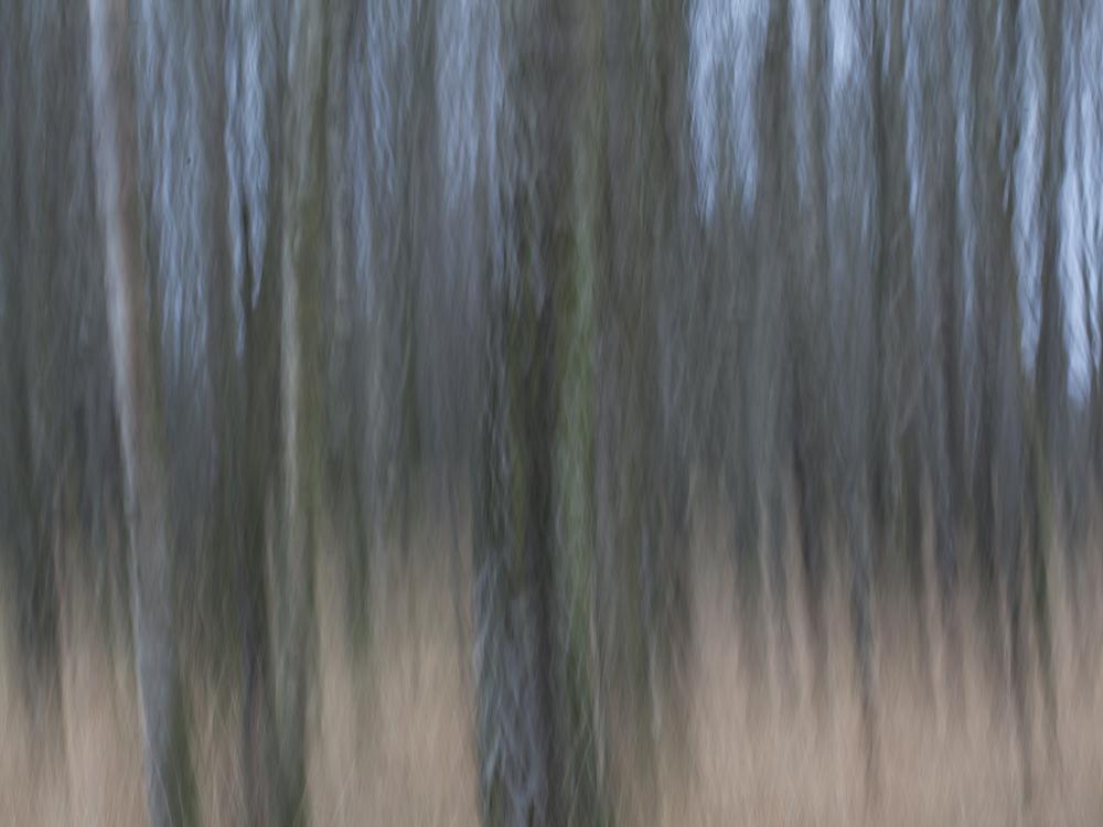 Monika Iburg - Im Moor