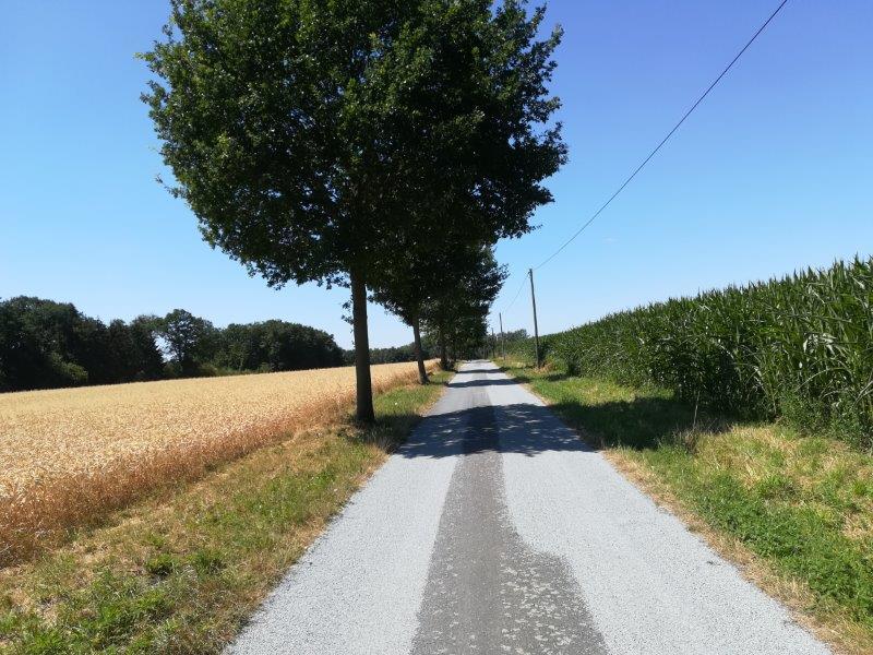 Weg im Sommer Copyright D. Kruse