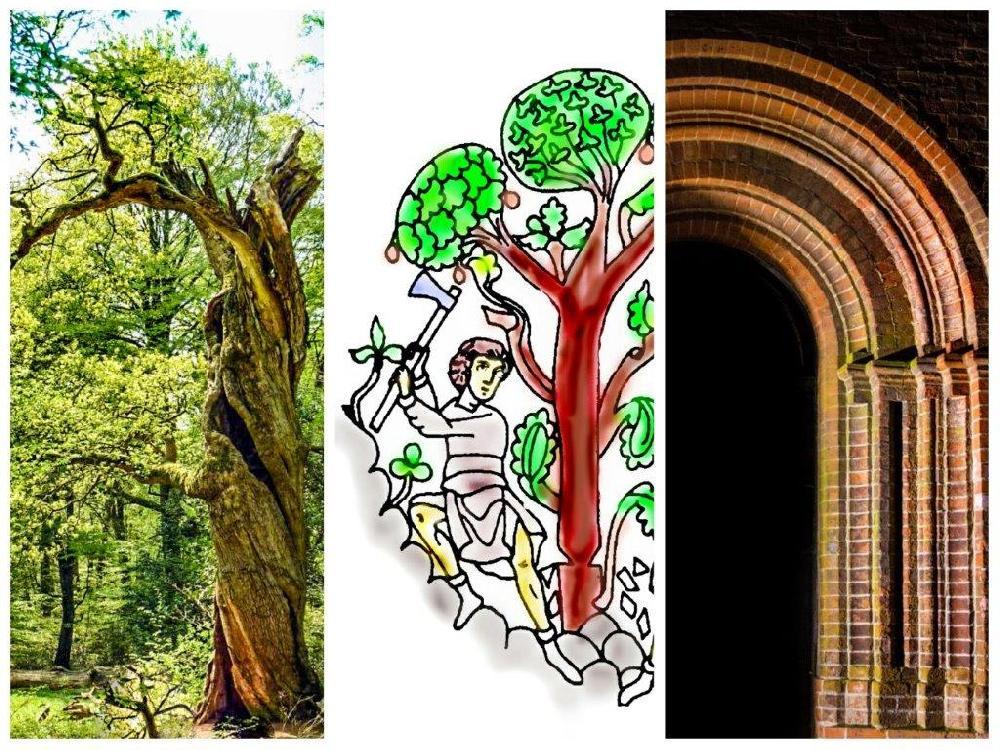 Collage Urwald Rodung Portal Marienkirche