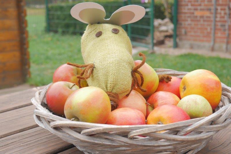 P1130639 Dr Maus im Apfelkorb klein.jpg