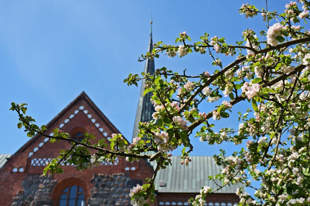 DSC_6653-1 Blick zur Marienkirche .jpg