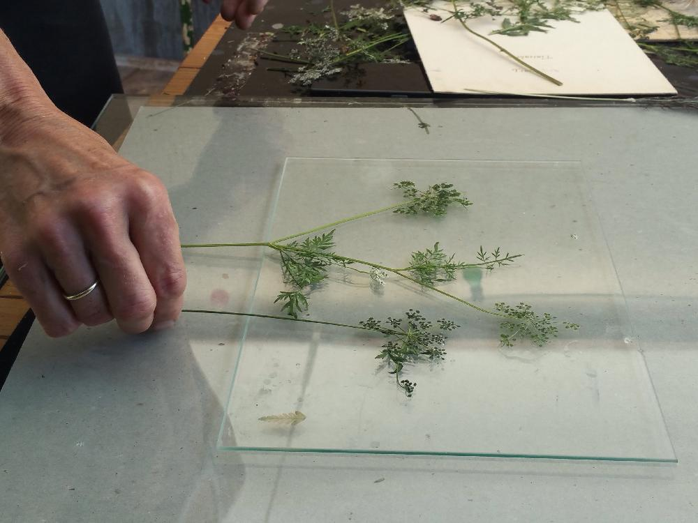 Gestalten des Motivs, hier durch Anordnen verschiedener Pflanzenteile.