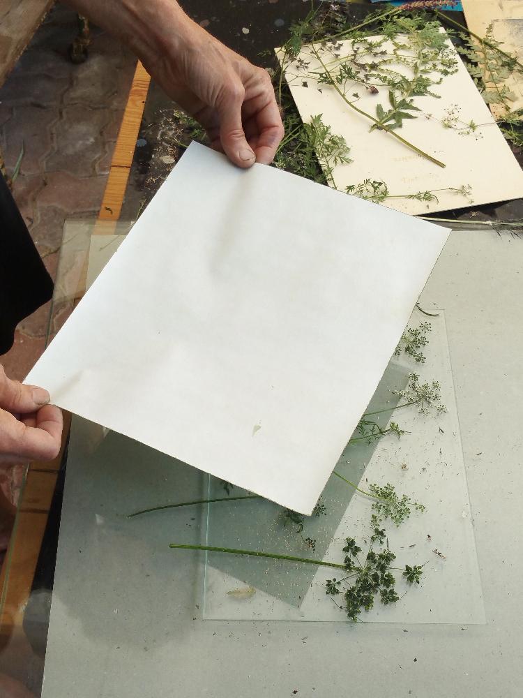 Das Papier, oder auch Stoff, werden vor der Verwendung beschichtet, so dass sie lichtempfindlich sind. Nach dem Auflegen des Bogens wird alles zusammen umgedreht  in die Sonne gelegt.